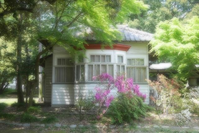 2020-05-02 館林城沼 063_R.JPG