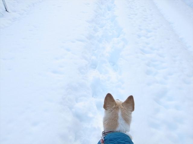 3.2014.2.9(雪の散歩) 014_R.JPG